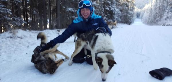 Huskies in Banff
